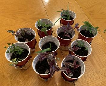 plants06261901.jpg