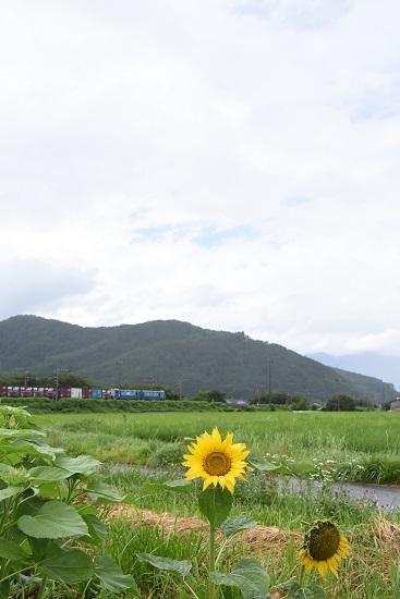 7月27日 東線貨物2083レを後撃ち