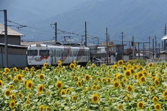 アルピコ交通 新村ひまわり祭りと300系