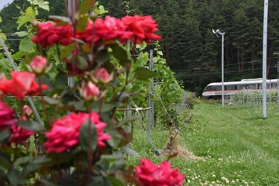 1007M 383系WVしなの7号と紅い薔薇の花