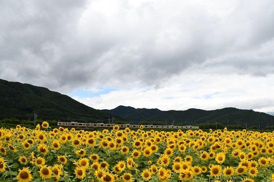 2019年8月15日 諏訪湖花火臨 E233系8000番台