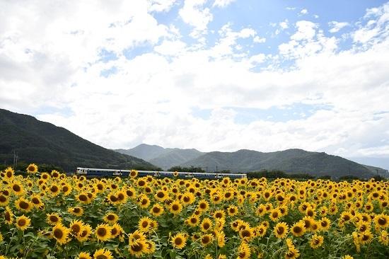 2019年8月15日 諏訪湖花火臨 E257系500番台