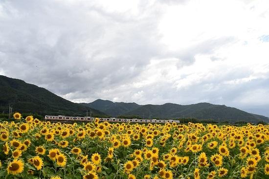 2019年8月15日 諏訪湖花火臨 E233系