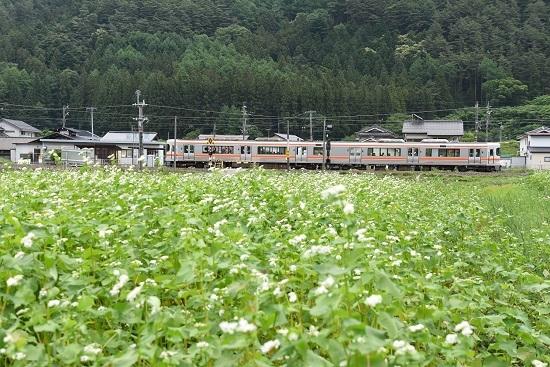 本山にて 313系と蕎麦の花