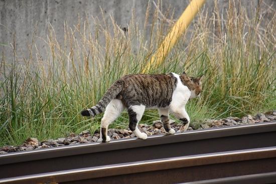 塩尻駅の主のネコ