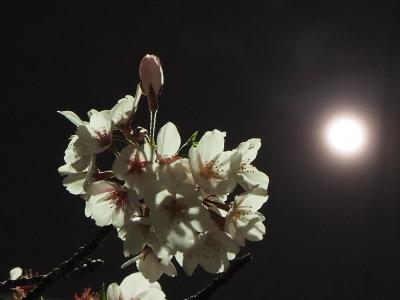 月と桜01