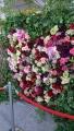 20190515バラ祭り1