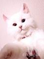Fotor_156406348613036.jpg