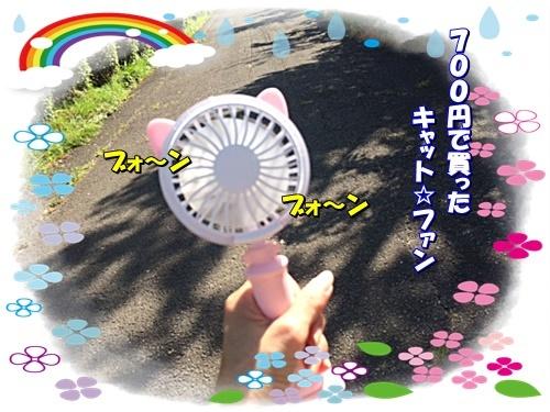 ohaka1_2019081010285520b.jpg