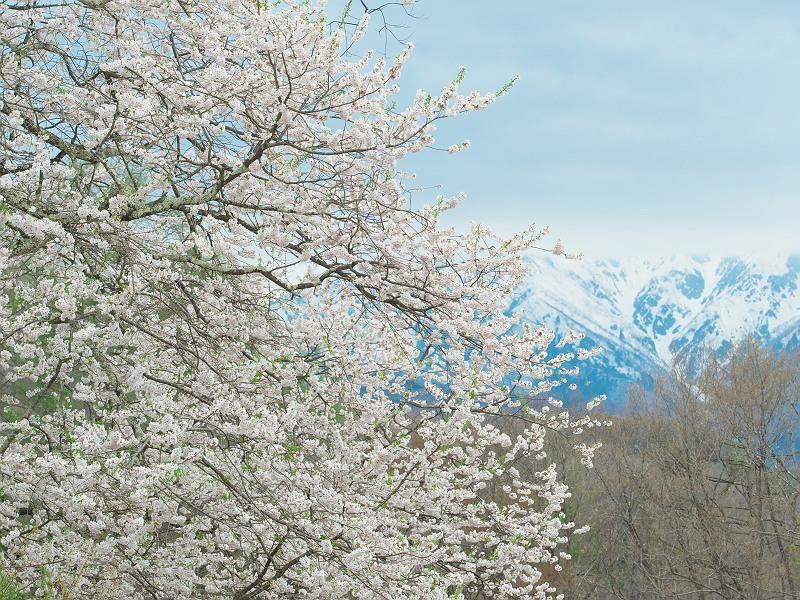 冬と春のあいだ