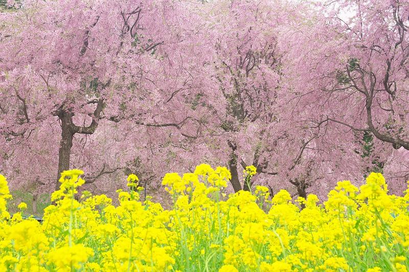 春色の風景