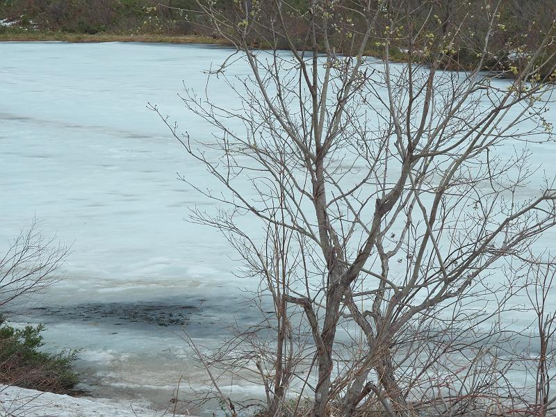 一沼も雪景色