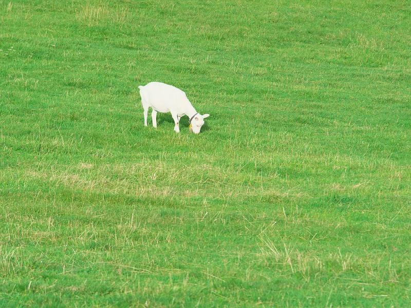 高原の牧場 2