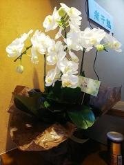 【新店】中華そばや 和凡-17