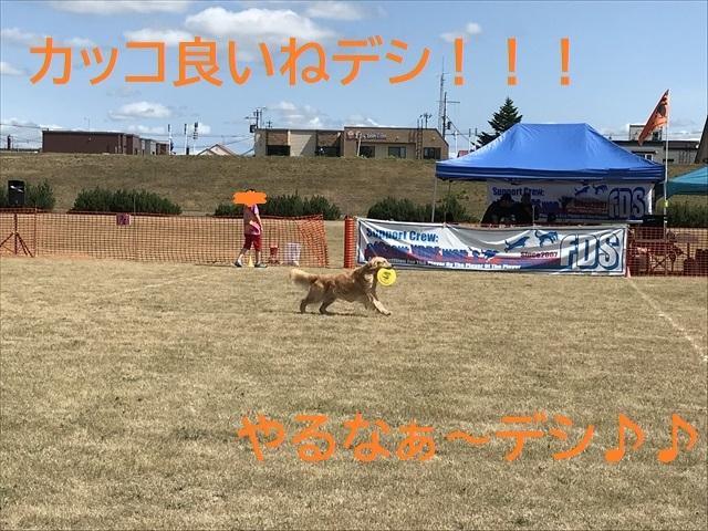 IMG_1329_PPP.jpg