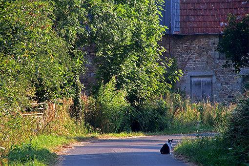 ノルマンディ シャンポーの町 猫との出会い