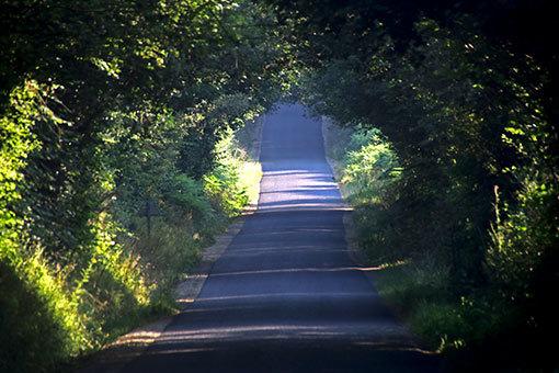 ノルマンディーの道 緑のトンネル