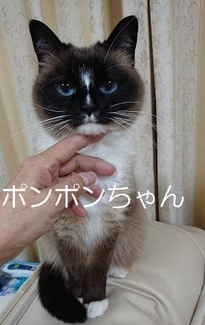 ポンポンちゃん ニャンコ