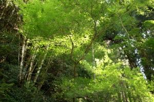 琵琶の滝1