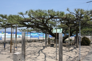 瀬居島10