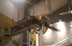 鯨の郷鯨館6