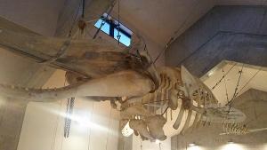 鯨の郷鯨館8