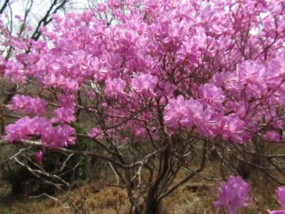 35周年記念月例自然保護部河原参道コースIMG_0855