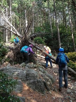 DSC06947倒木あり