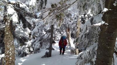 1西吾妻登りははじめ樹林帯