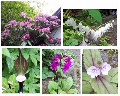 2 庭先の花