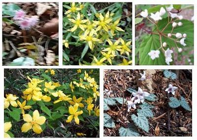 22御岳山の花
