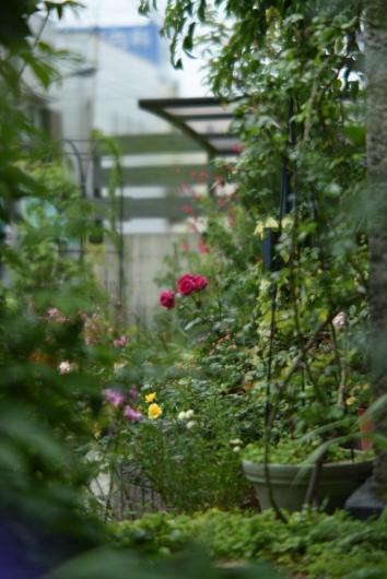 garden20190622.jpg