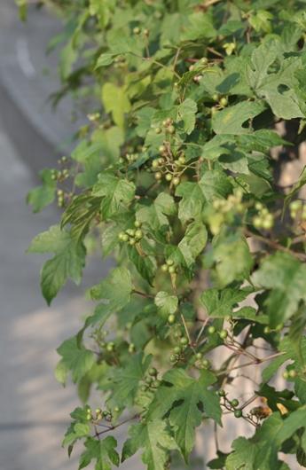 nobudou20190805-2.jpg