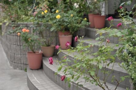 roses20190628-3.jpg
