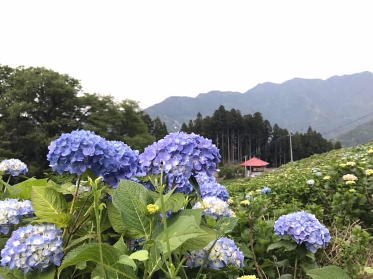 R10616hisayabu2.jpg