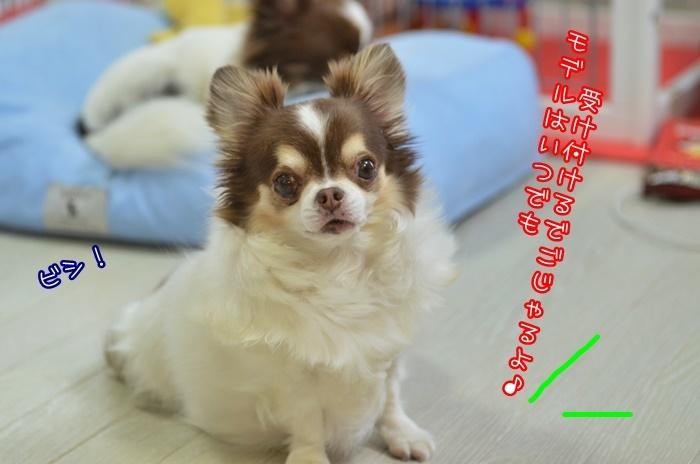 DSC_1064_201906131927463c5.jpg