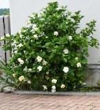 植物 (1)