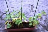 植物2 (1)
