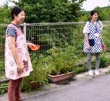 トマト収穫 (1)