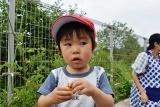 トマト収穫 (14)