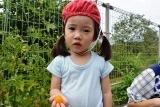 トマト収穫 (20)