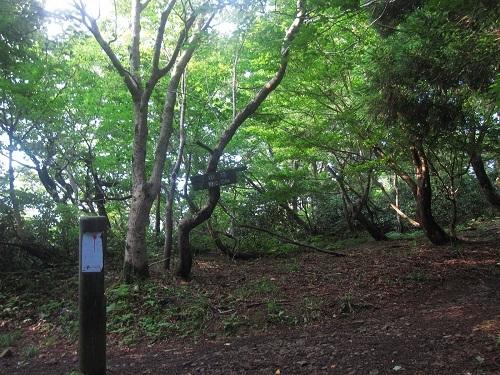 nosakadake010728 (5)