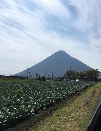 開聞岳(キャベツ畑)