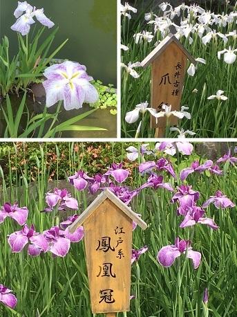 日本庭園9