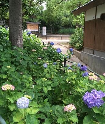 藤森神社4