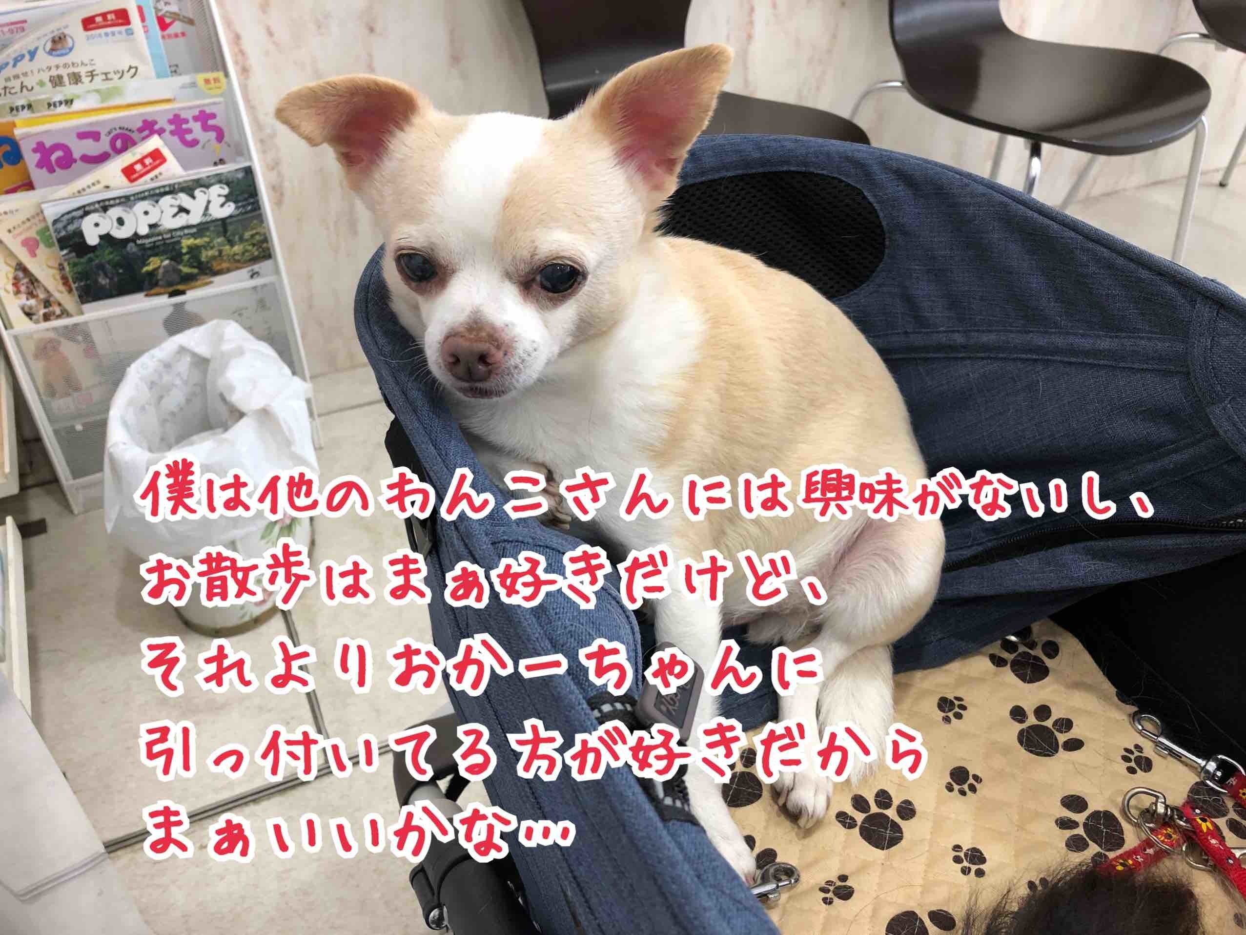 IMG_9728.jpg