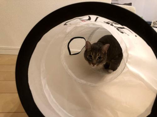 続「ピュリナワンキャットトンネル」で遊ぶ