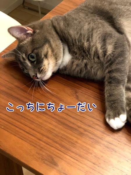 IMG_7407e.jpg