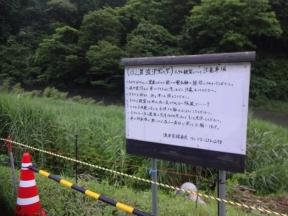 大日川の向がゲンジホタル