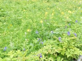 五竜⑥お花畑